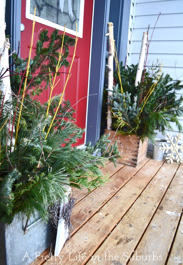 Fresh Evergreen Christmas Pots