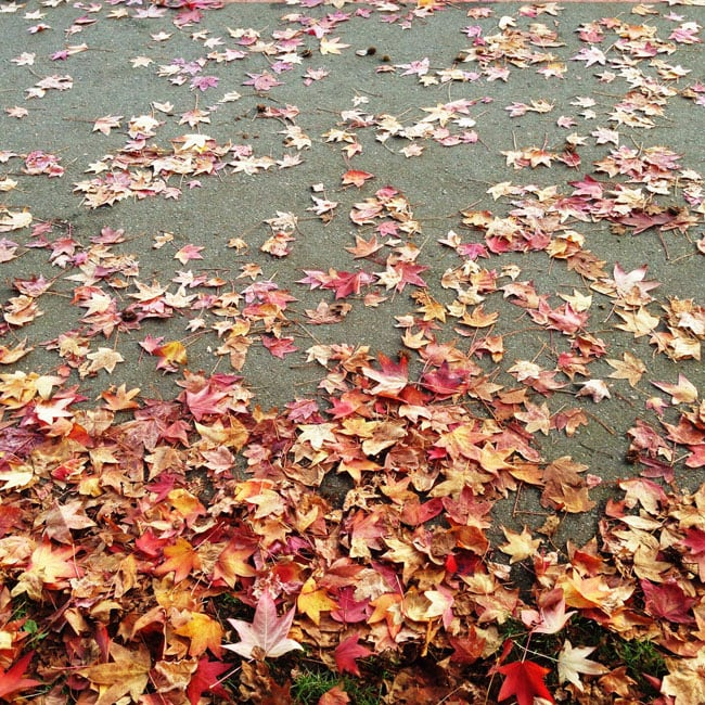 Maple-Leaves-{A-Pretty-Life}