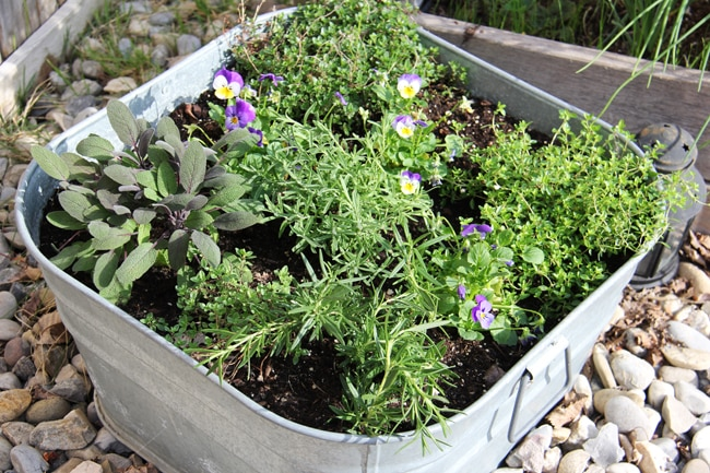 Herb Container Garden {A Pretty Life}