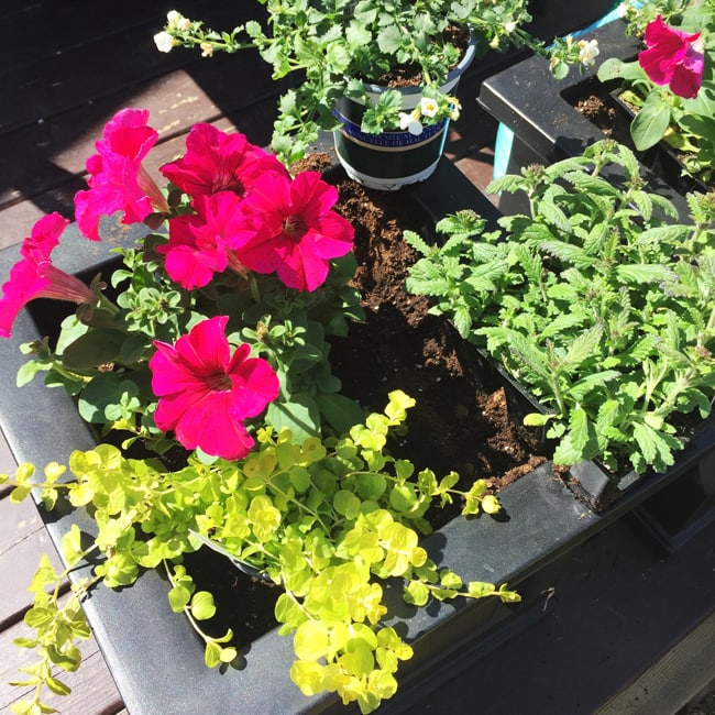 Container Gardening {A Pretty Life}4