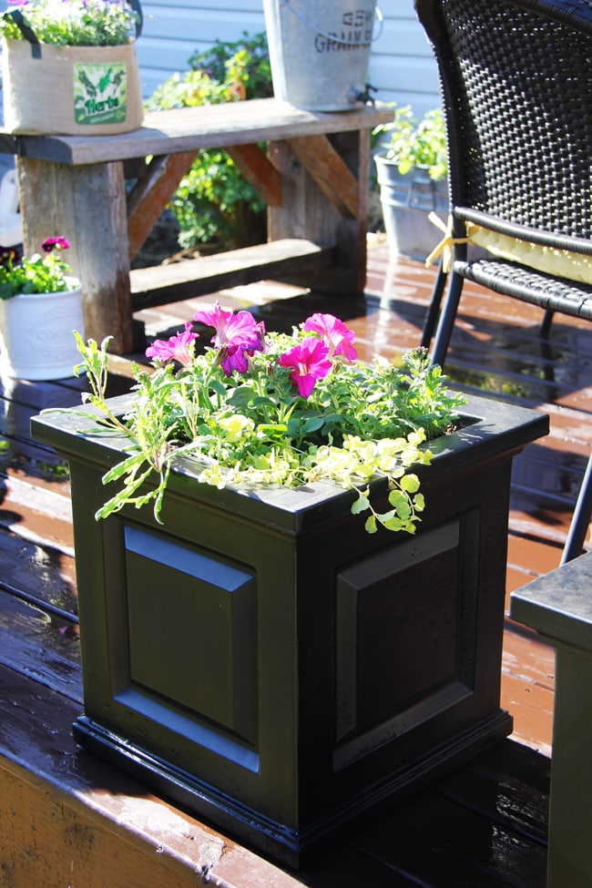 Container Gardening {A Pretty Life}8