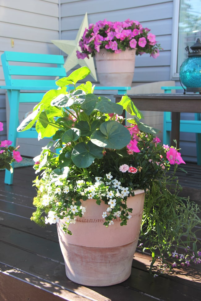 Create a Summer Flower Garden Patio!
