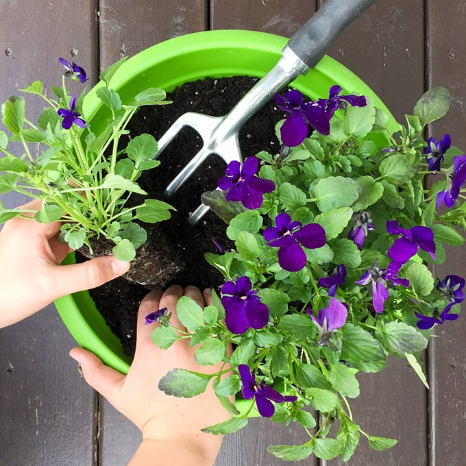 Gardening with Kids - A Pretty Life In The Suburbs