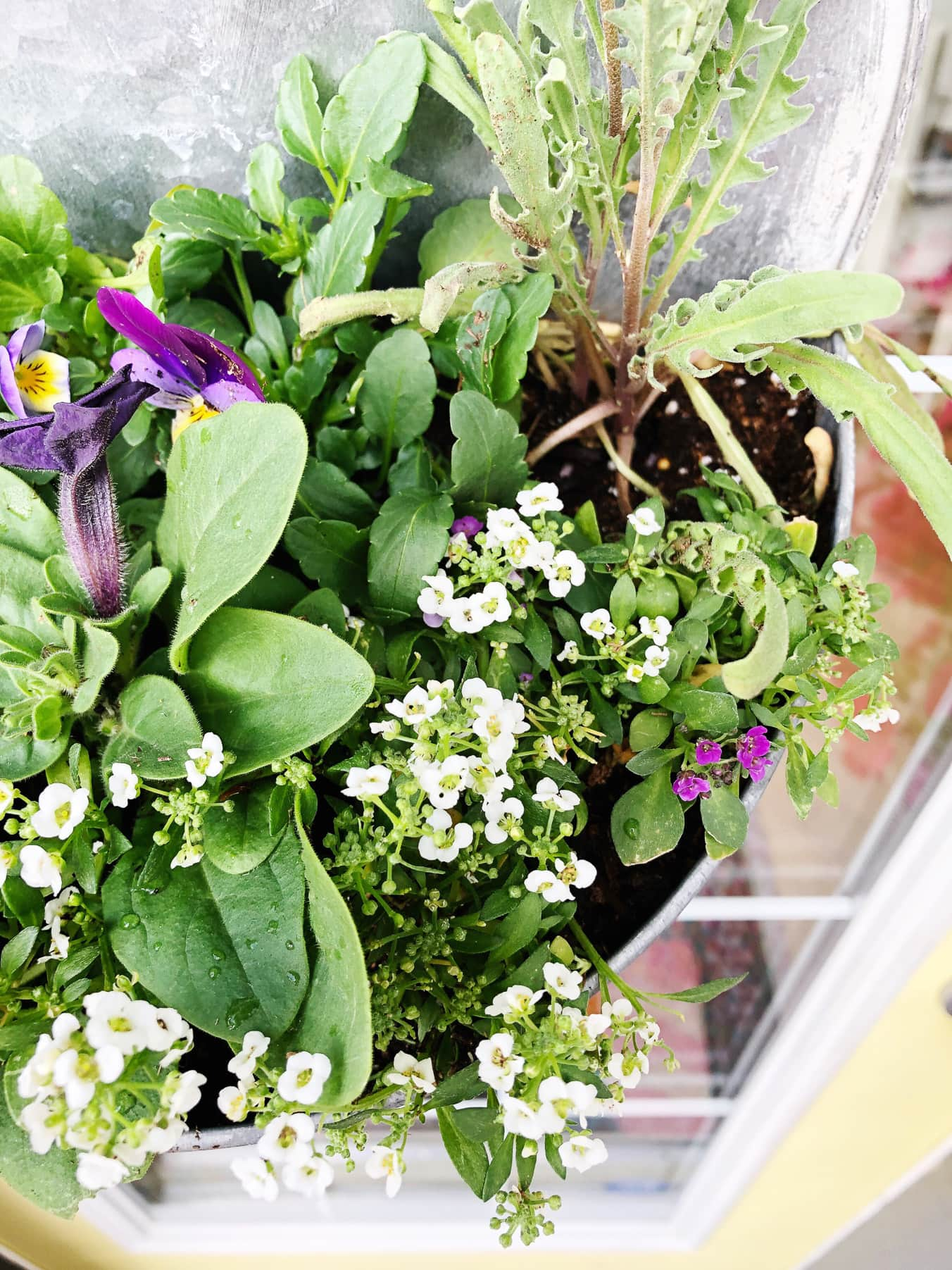 How to Make a Fresh and Fragrant Hanging Basket for your Door