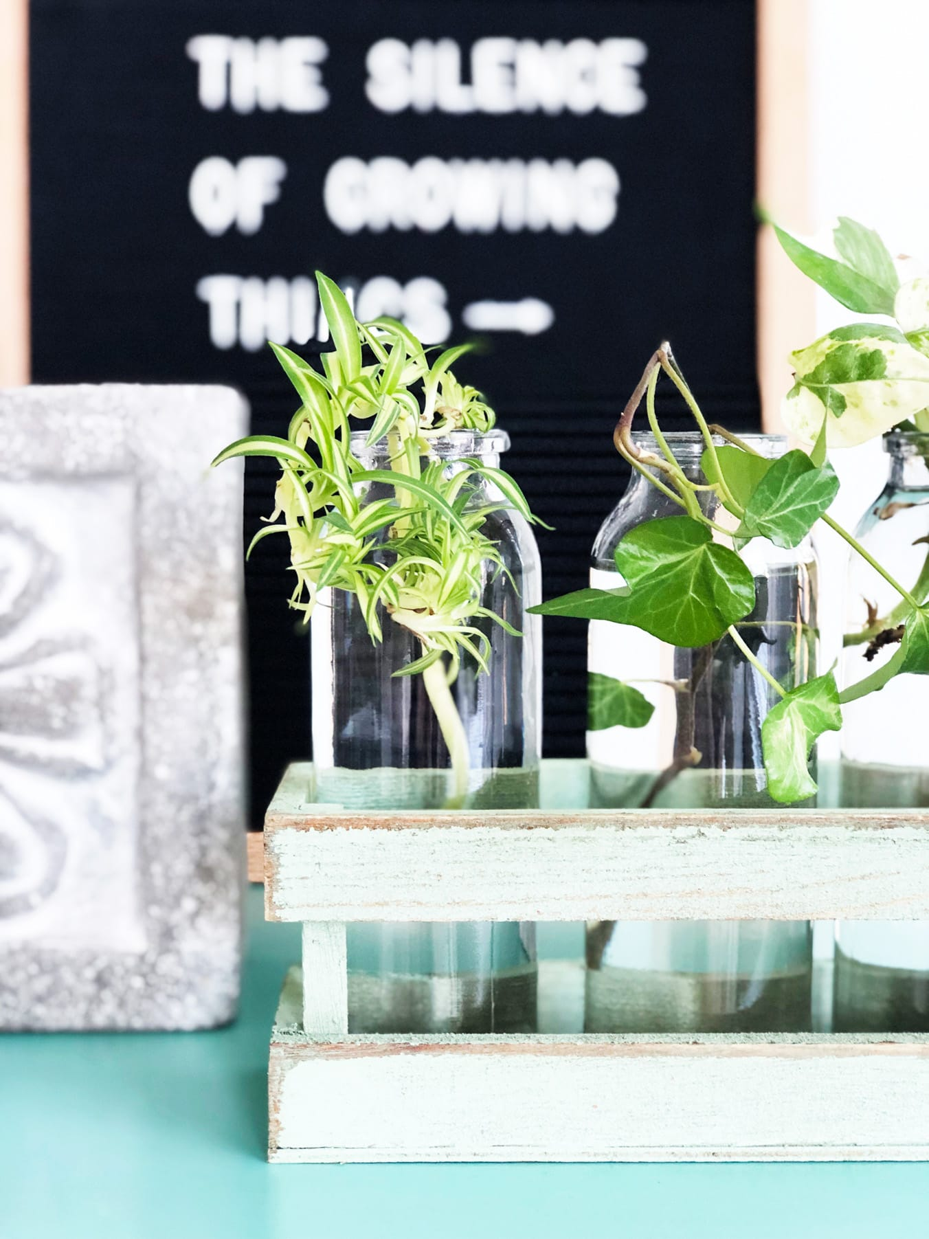How to Grow Plants From Cuttings