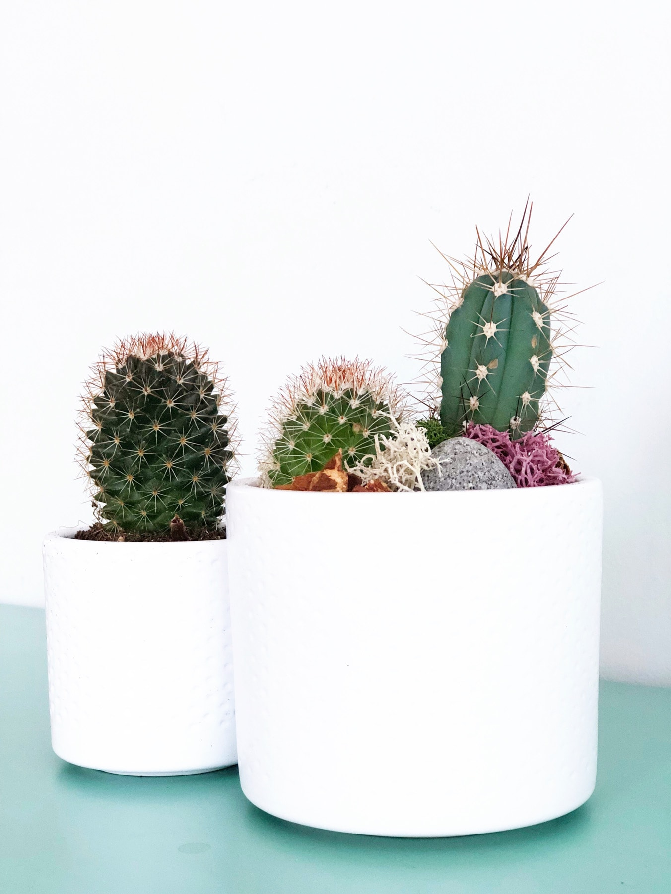 A Simple Spring Vignette with Cacti