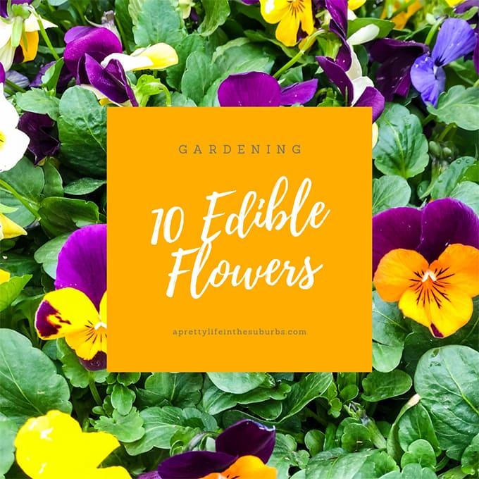 Planting an Edible Flower Garden
